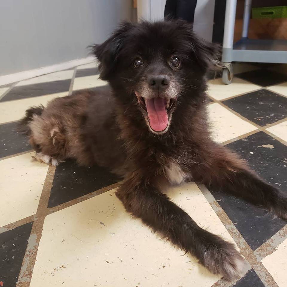 Linus-Small Dog for Forever Foster-Old Friends Senior Dog Sanctuary