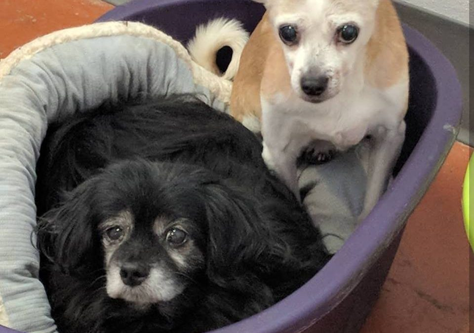Apollo and Ester-Bonded Pair Forever Foster