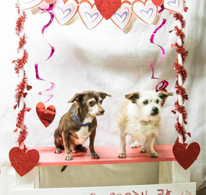 Bentley and Paris-Bonded Pair Forever Foster