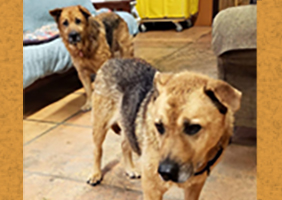 Daisy and Dixie-Bonded Pair Forever Foster