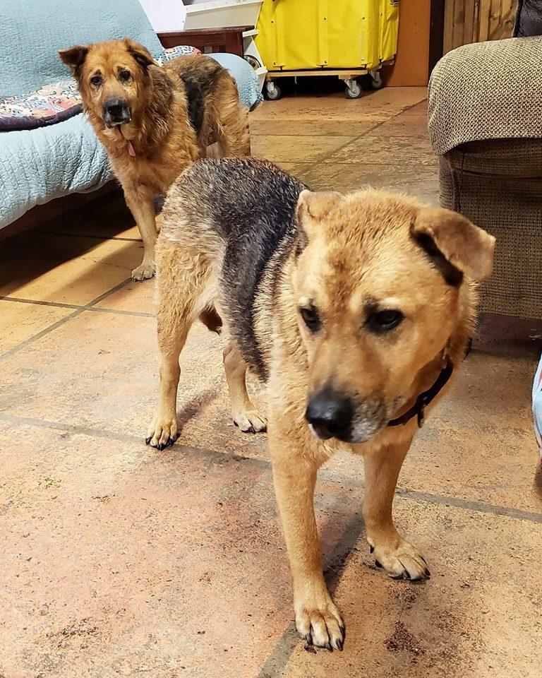 Daisy and Dixie-Bonded Pair-Old Friends Senior Dog Sanctuary