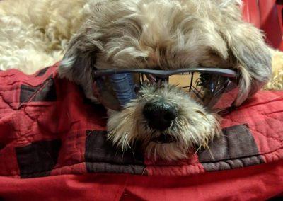 Dallas-Blind or Mostly Blind Dog Forever Foster