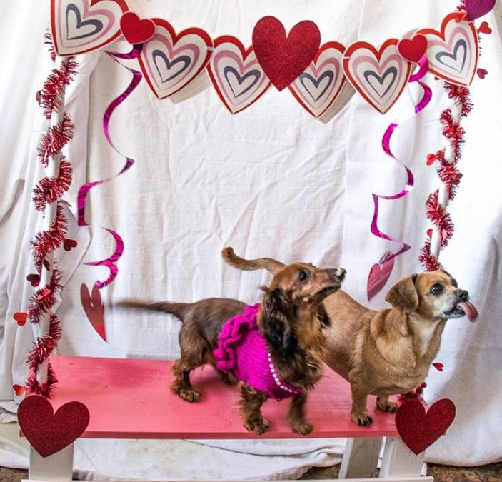 Duchess and Fanny-Bonded Pair Forever Foster