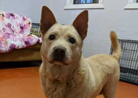 Florence-Dog Selective Forever Foster