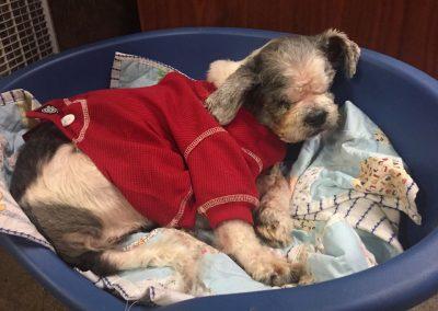 Houston-Blind or Mostly Blind Dog Forever Foster