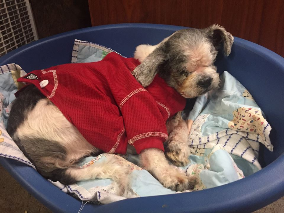 Houston-Blind or Mostly Blind Dog for Forever Foster-Old Friends Senior Dog Sanctuary