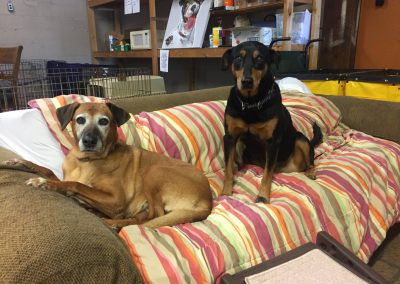 LB and Lady-Bonded Pair Forever Foster