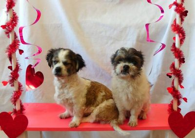 Mickey and MInnie-Bonded Pair Forever Foster