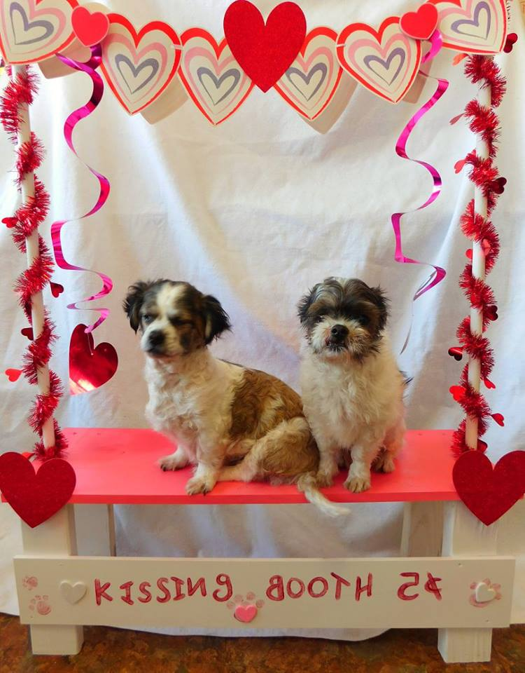 Mickey and Minnie-Bonded Pair-Old Friends Senior Dog Sanctuary