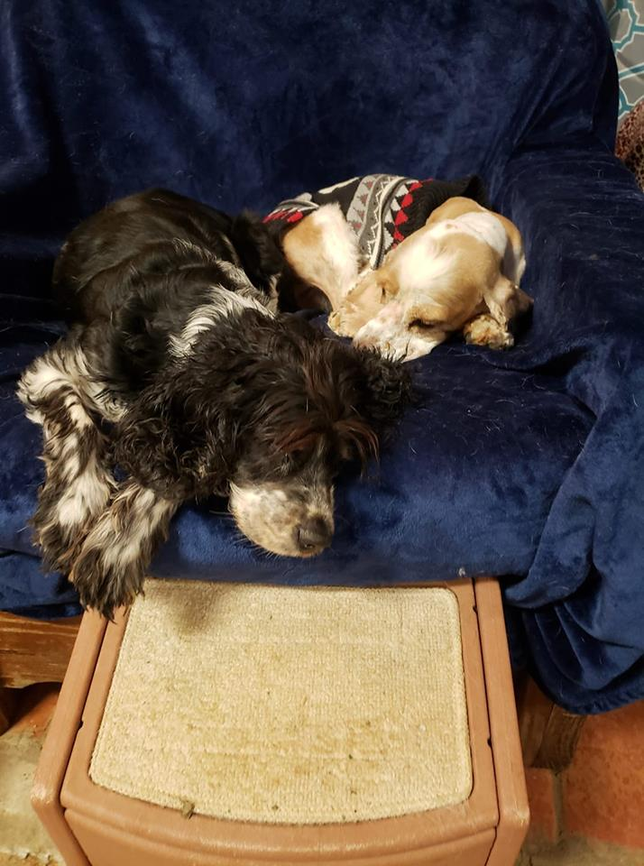Oreo and Cinnamon-Bonded Pair-Old Friends Senior Dog Sanctuary