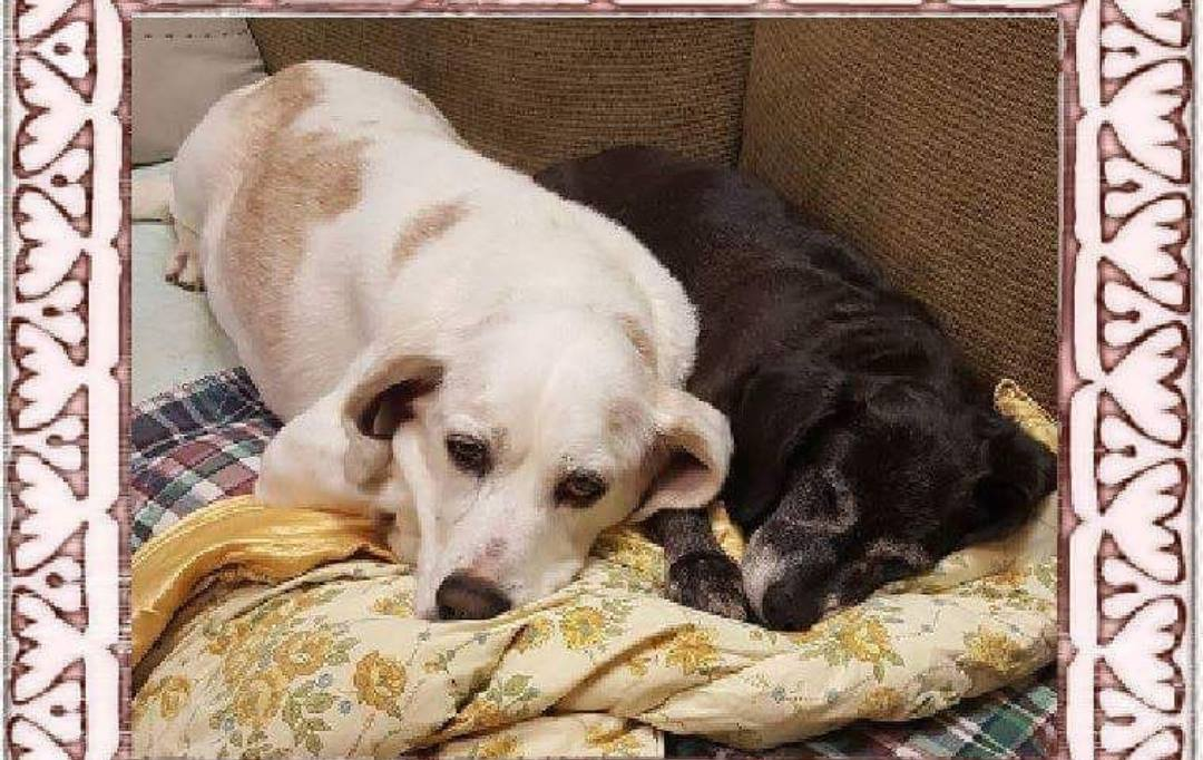 Roscoe and Peppers-Bonded Pair-Old Friends Senior Dog Sanctuary
