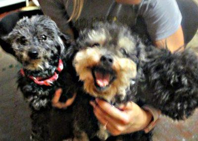 Caesar & Beasley & Sophie