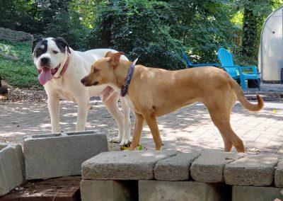 Mocha & Bugsy