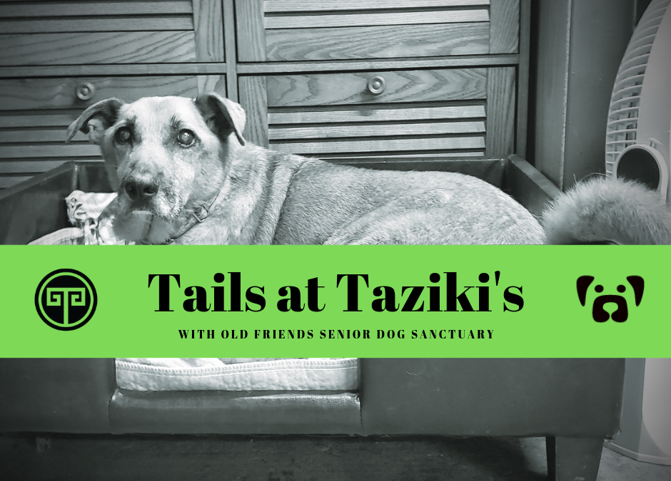 Tails at Taziki's