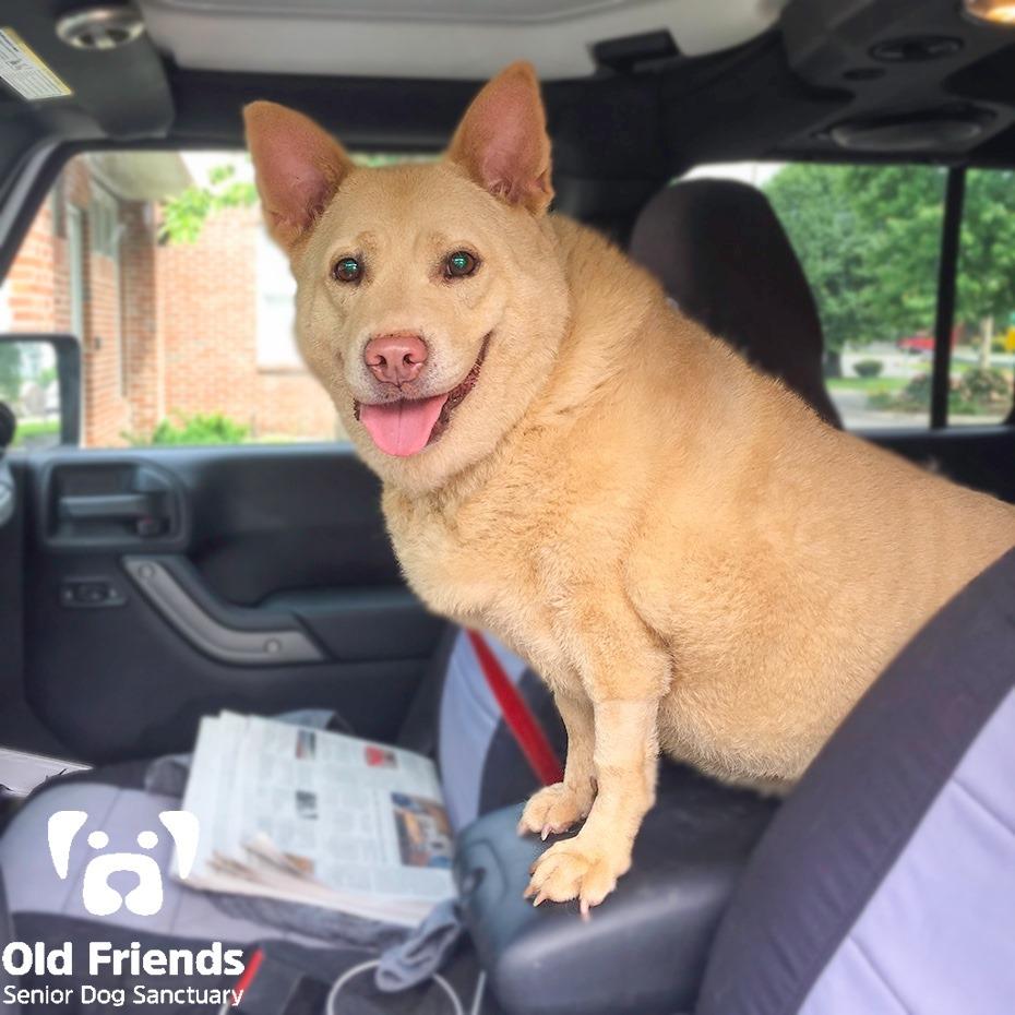Florence-Selective Dog for Forever Foster-Old Friends Senior Dog Sanctuary
