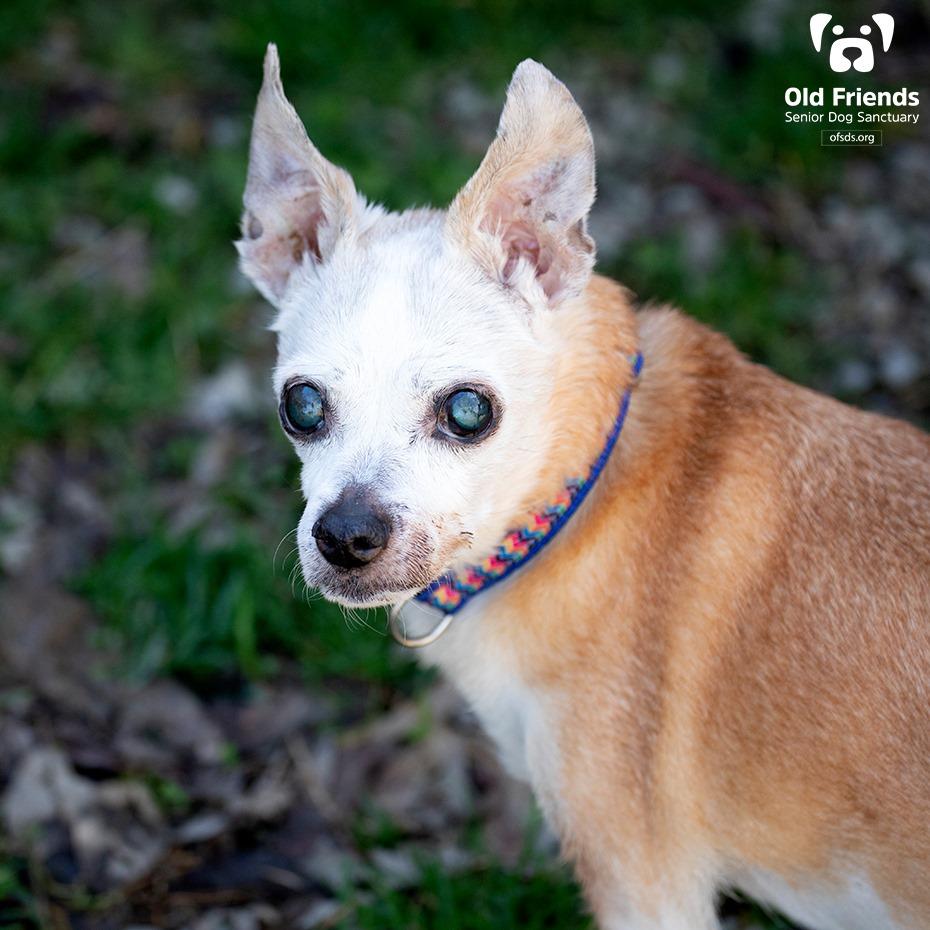 Apollo and Ester-Bonded Pair-Old Friends Senior Dog Sanctuary