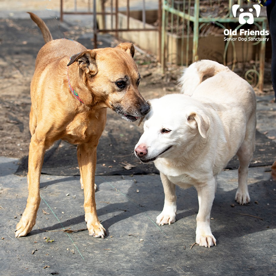 Iggy & Shasta