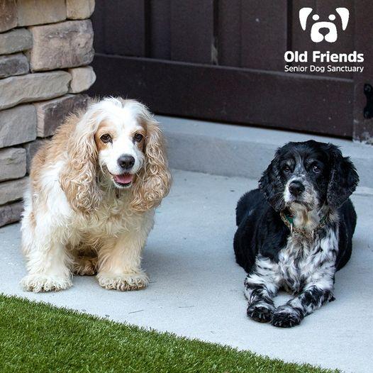 Oreo and Cinnamon-Bonded Pair-Old Friends Senior Dog Sanctuary