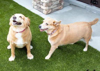 Molly & Missy