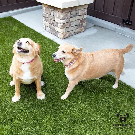 Bubba & Kelley